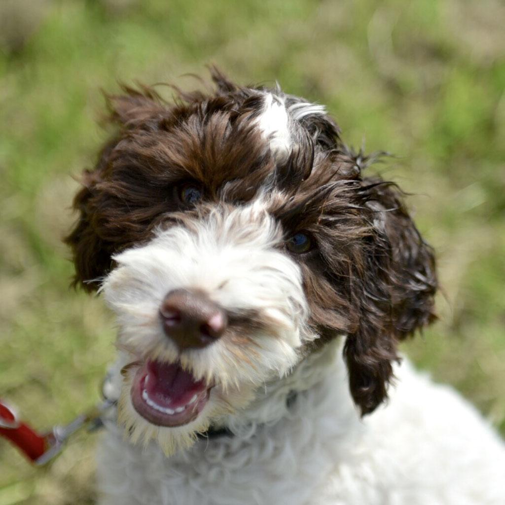 puppy_dog